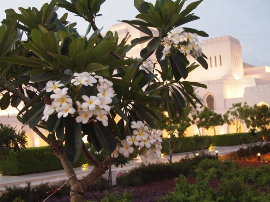 flowering tree in front of the Royal Opera House Muscat