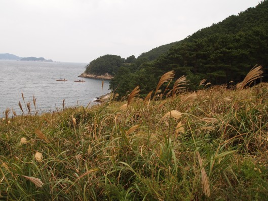 ripples of water and ornamental grasses in Geoje-si, South Korea (inspired by mrs. carmichael)