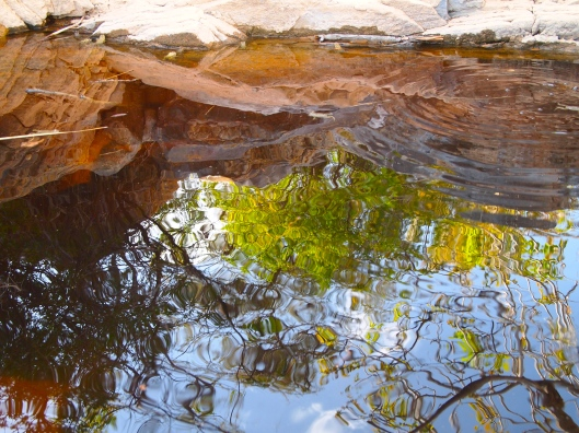 ripples in a frog-filled pond on Jebel Akhdar