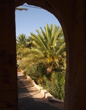 date palms through an arch