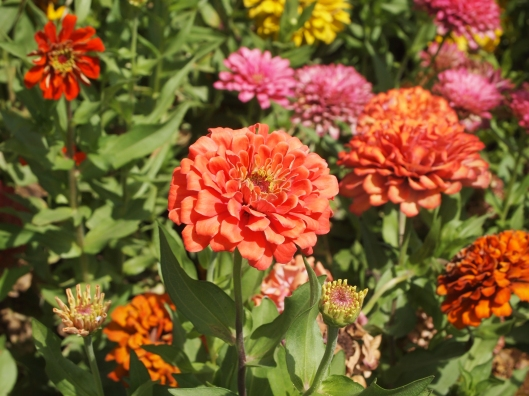 marigolds at Muscat Gate